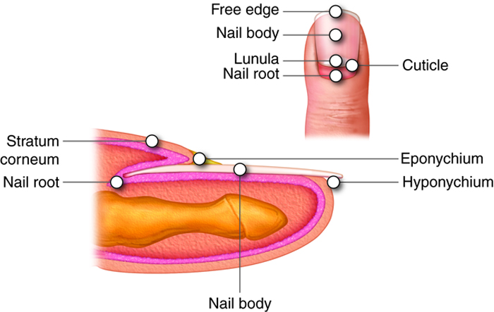 Fancy Free Edge Of The Nail Composition - Nail Art Design Ideas ...
