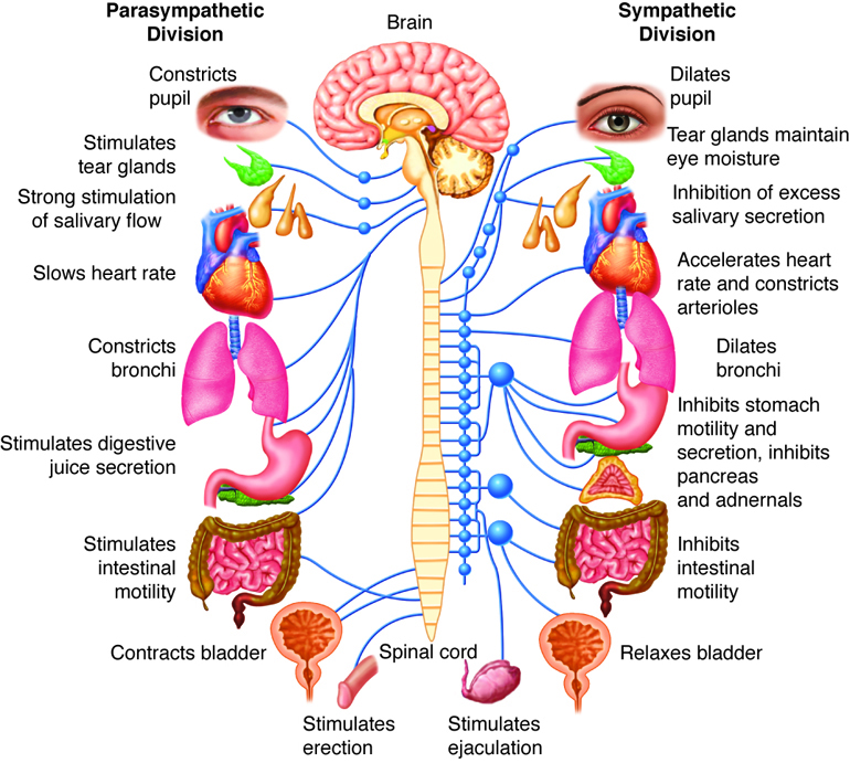 Nervous System Functions Data Set