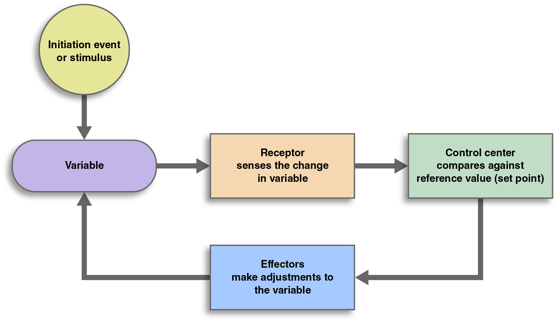 Feedback loops generic feedback loop that shows the input entering the system arrow to a receptor arrow to pooptronica