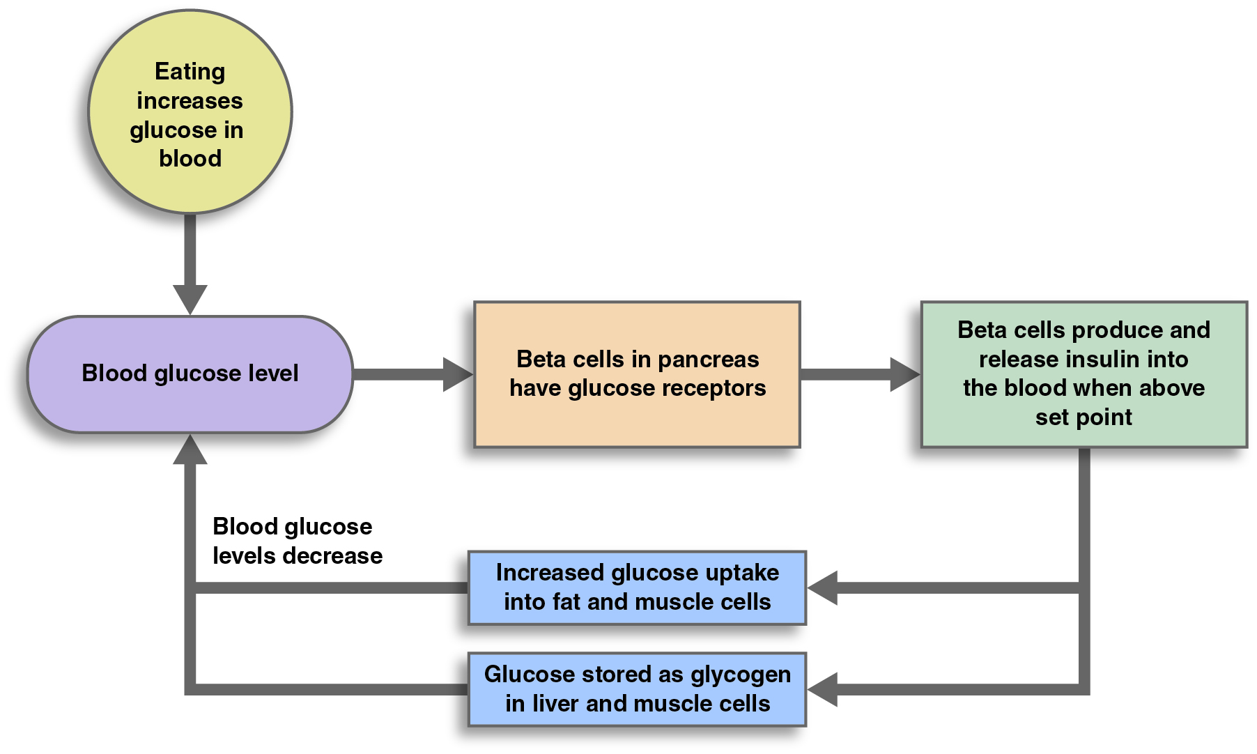 controlling blood glucose levels diagram choice image