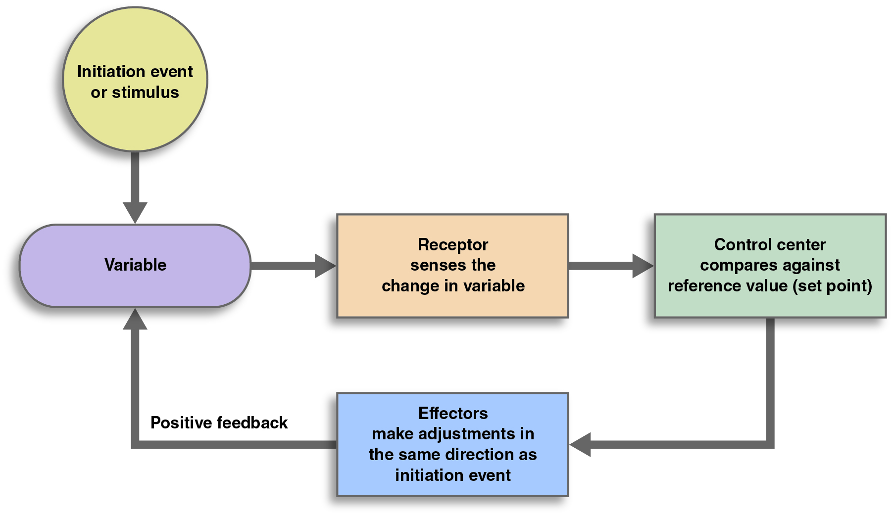 What Would End The Feedback Loop Of Lactation Wiring ...