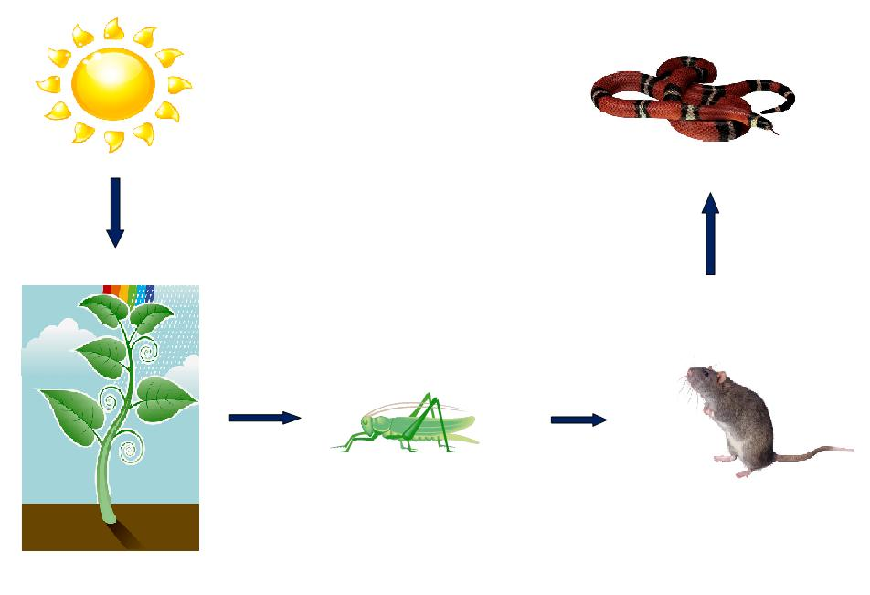 What Eats What In A Food Chain