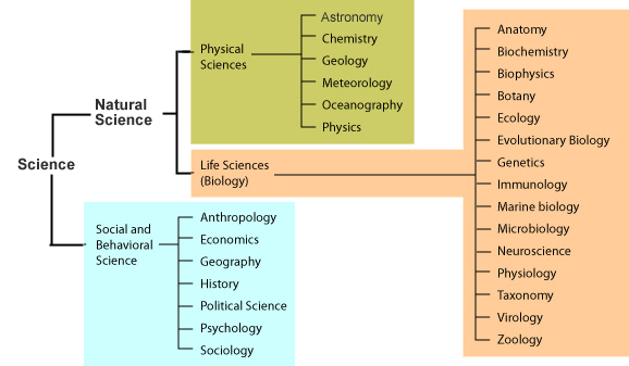 university college (links to an external site ) cc-by-nc (links to an  external site )  this diagram shows the organization of the branches of  science
